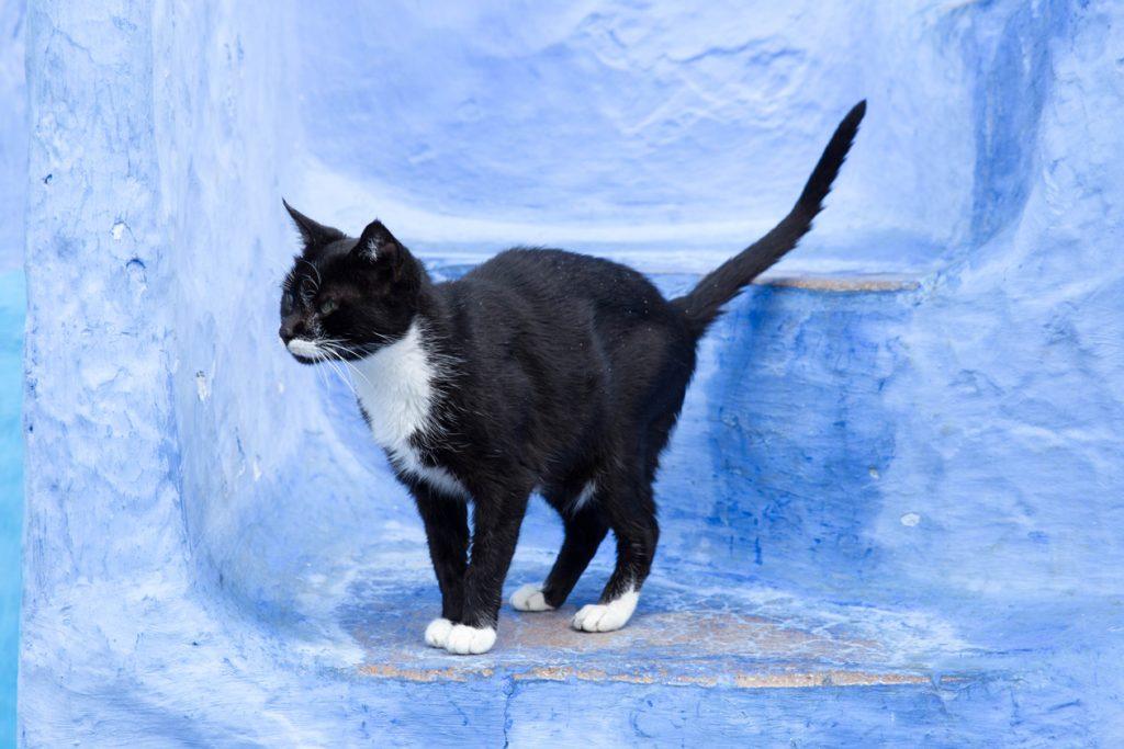 Szewszawan,Maroko,kot,schody