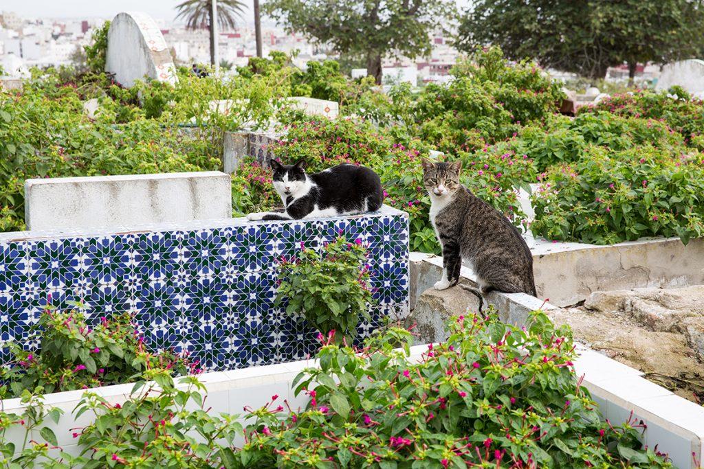 cmentarz,koty,tetuan,maroko