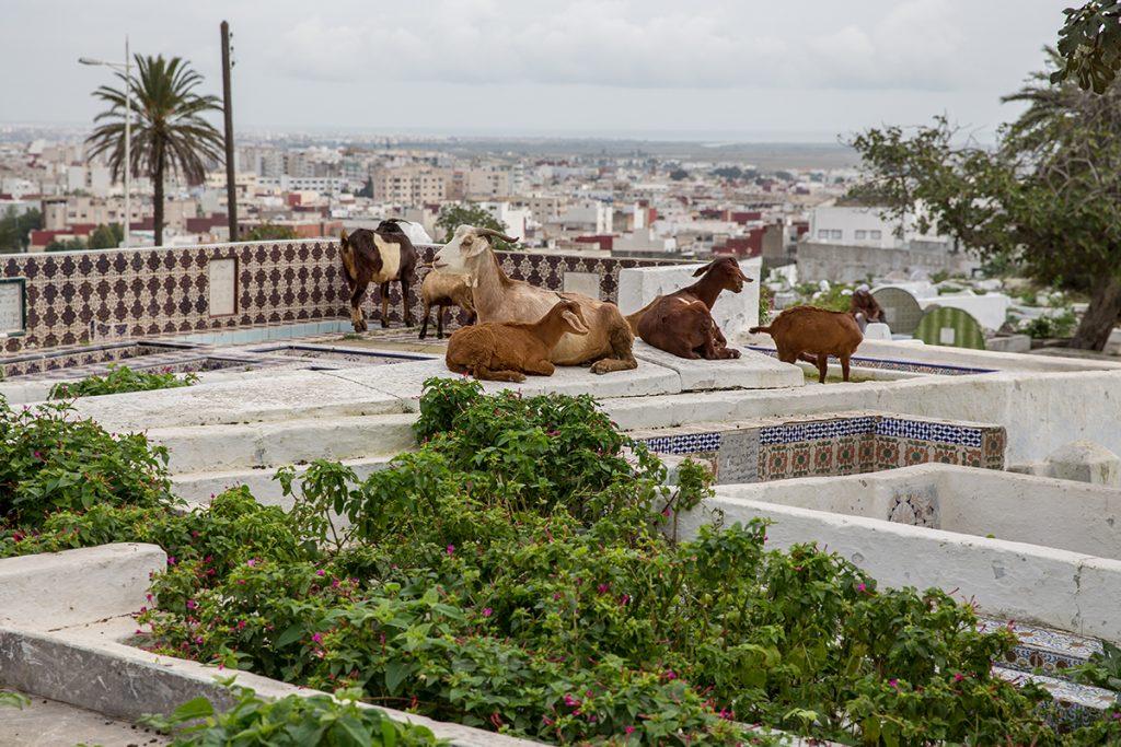 cmentarz,kozy,tetuan,maroko