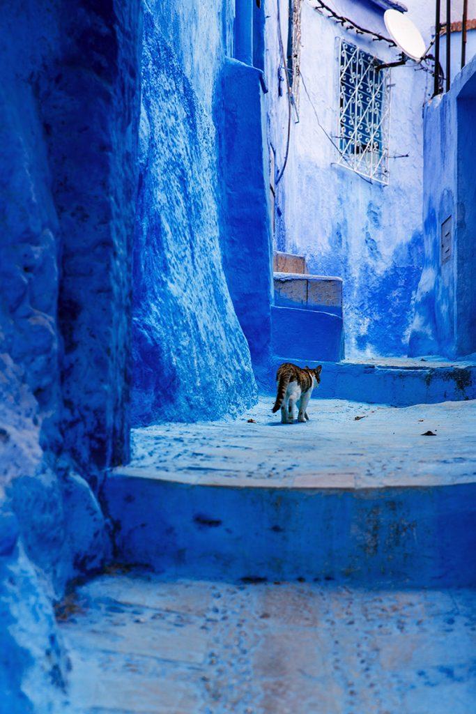 Szewszawan,Maroko,medyna,kot,niebieski