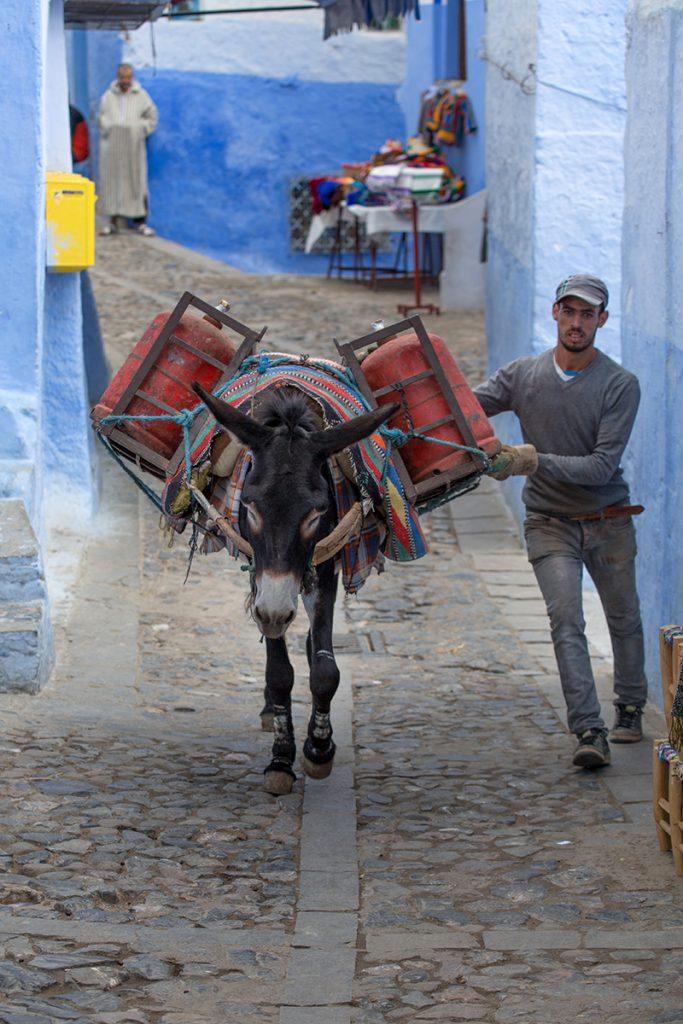Szewszawan,Maroko,medyna,osiołek,uliczka