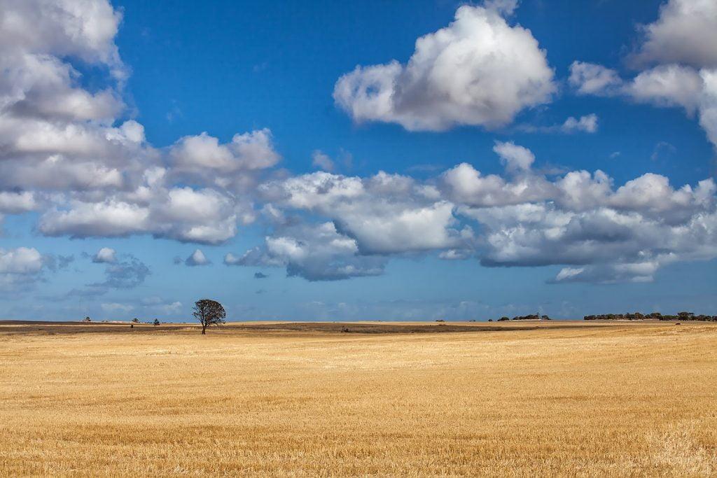 Skoszone zboże,uprawne pola,krajobraz,drzewo,chmury
