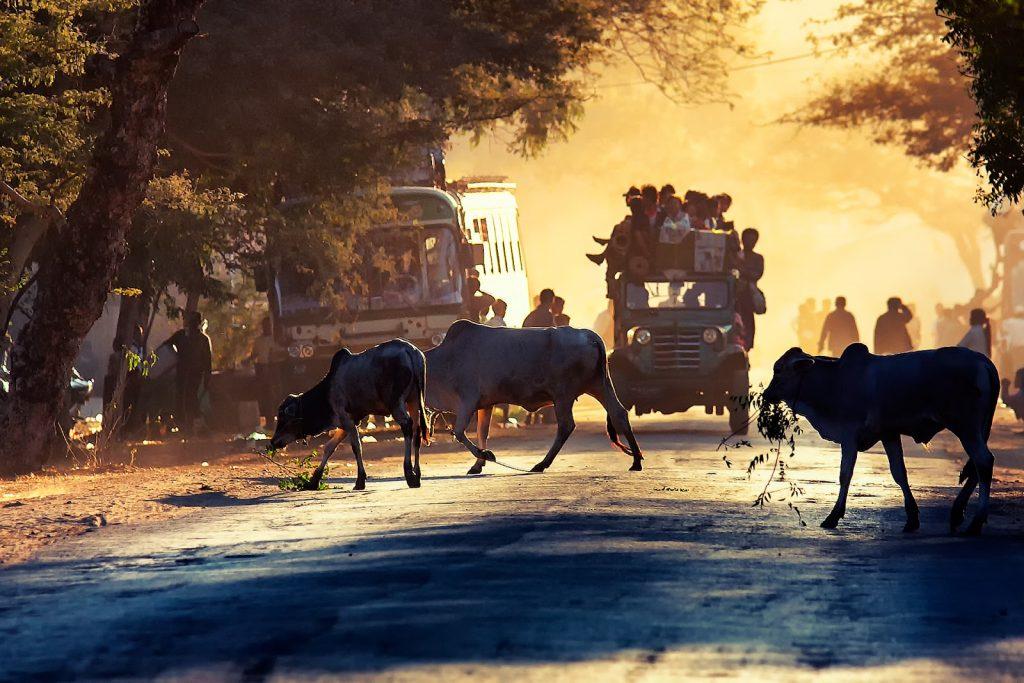 bagan,targ,birma,ludzie,bydło