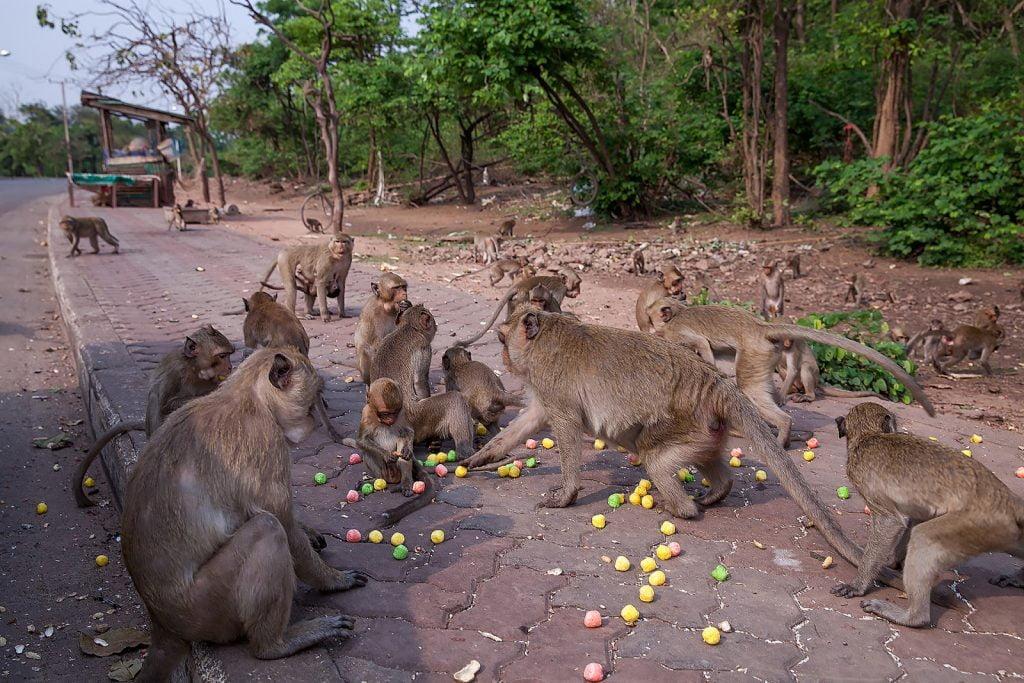 Makaki,chrupki,Tajlandia,małpy