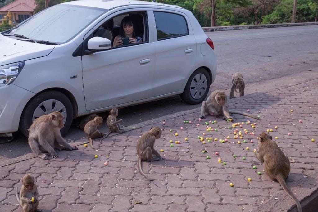 makaki,tajlandia